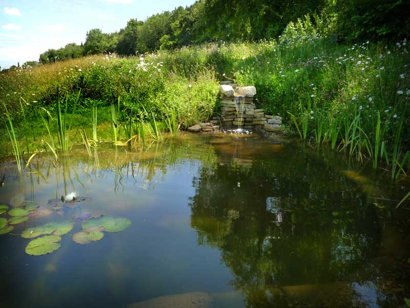 stream-pond-4.jpg