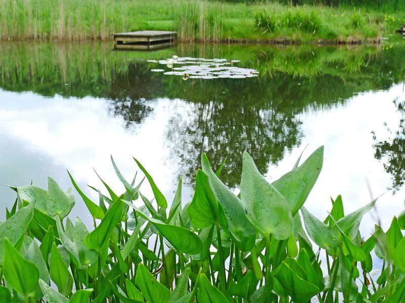 dorset-pond-2a.jpg