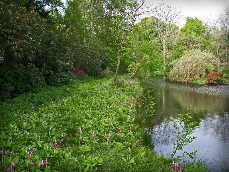 berkshire-lake-restoration-1.jpg