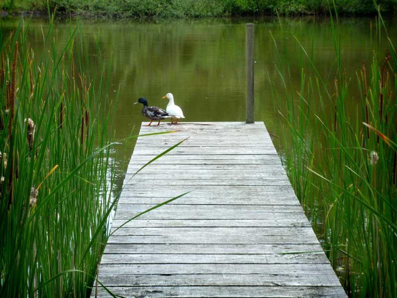 berkshire-lake-restoration-2.jpg