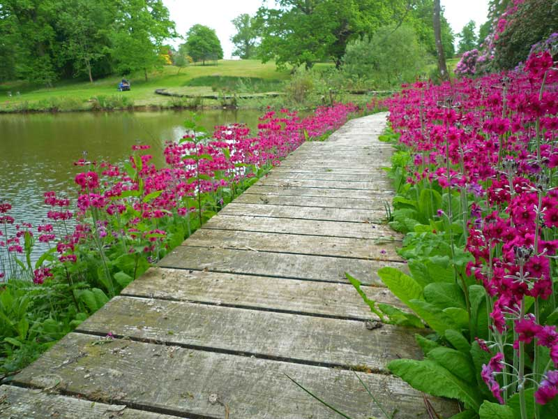 Boardwalk around lake