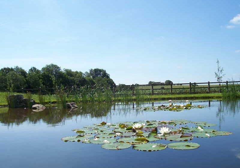 LAKE AND POND CONSTRUCTION-natural-pond-andover-2a-landscape