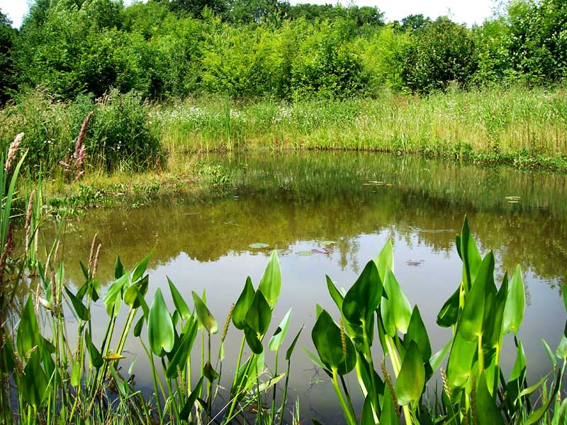 Natural wildlife pond construction, Alton, Hampshire
